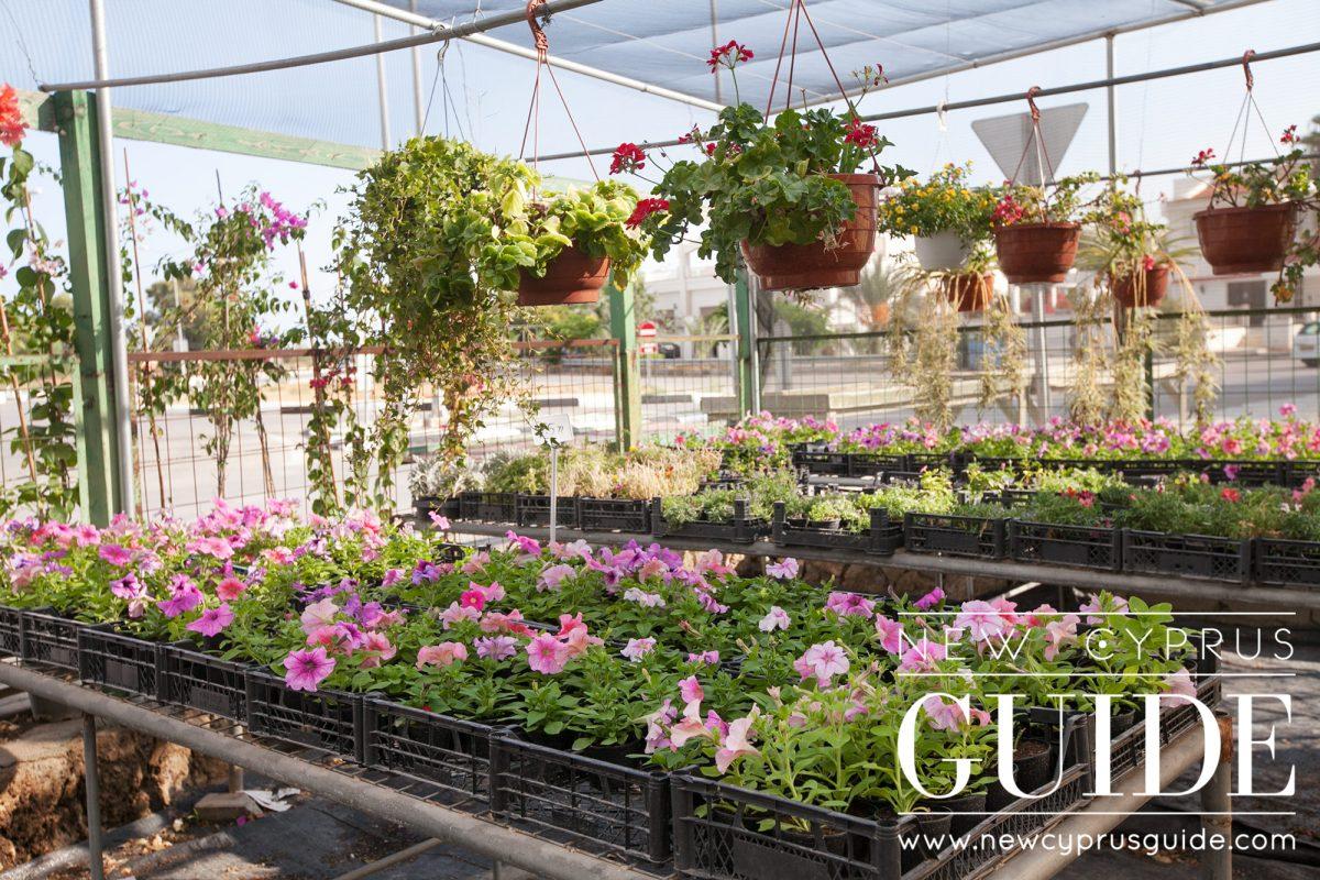 Romantic Garden Florist New Cyprus Guide